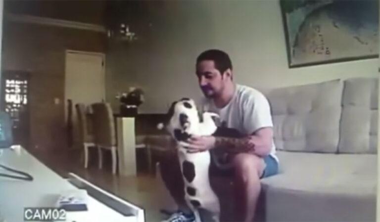 הכלב שלה התנהג מוזר אז היא שמה מצלמה נסתרת וזה מה שהיא גילתה!