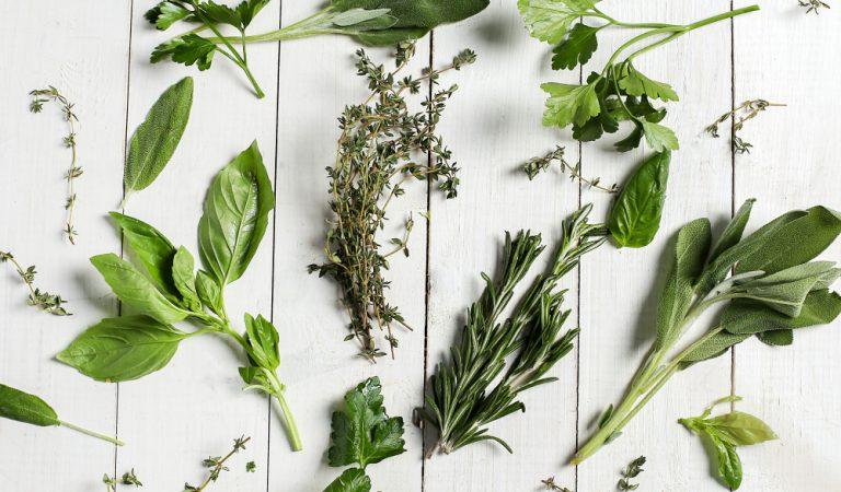 היתרונות של גידול צמחי מרפא